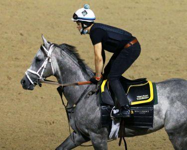 Winning Impression Horse
